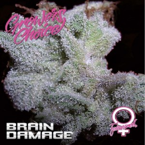 Brain Damage Growers Choice FEMM.